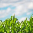 field-agriculture-farm-cereals