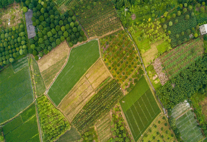 Corteva Agriscience joins forces with DroneDeploy to bring ... on uav mapping, robot mapping, heart mapping, aai aerosonde, aisheng drone-2, lockheed u-2, micro air vehicle, satellite navigation, stealth aircraft, flight dynamics, general atomics mq-1 predator, heat mapping,