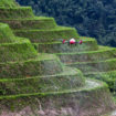 XAG-Drone-Spraying-Small-Farmland-in-Terrain